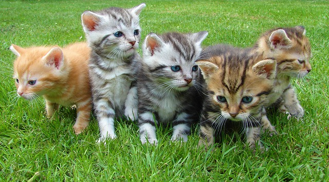 national kitten day world саt day national саt day 2015 international саt day 2016 world саt day 2016 national kitten day 2016 national саt day uk national саt day 2017