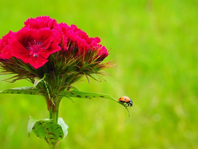 spain's national bird spain national tree national flower of italy national flower of all countries national fruit of spain national flower of china national flower of germany national flower of france