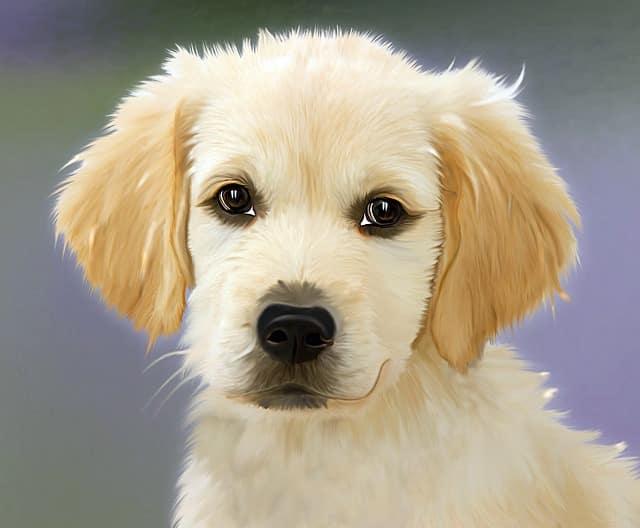 national puppy day national dog day 2016 national dog day quotes national pet day national dog day 2015 national cat day national dog day instagram national dog day 2017 2018