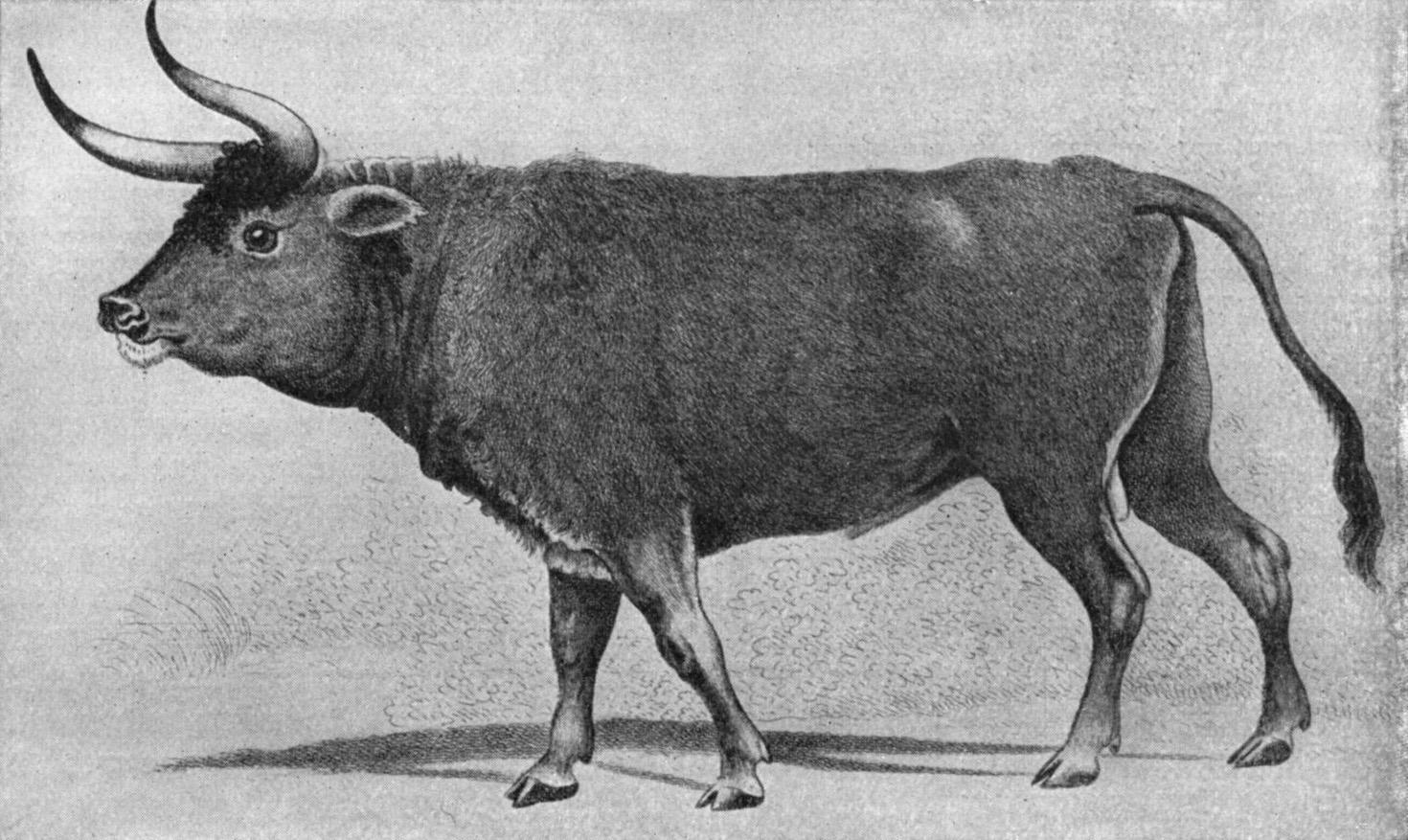 National Animal of Moldova
